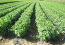Ускоро конкурс за програм подршке трстеничким пољопривредницима