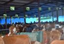 Пољопривредни сајам у Крушевцу најзначајнији агробизнис догађај централне Србије