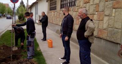 Обнављање дрвореда у Варварину (ФОТО)