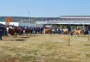 У Крушевцу одржан 11. Пољопривредни сајам и 18. Регионална сточарска изложба